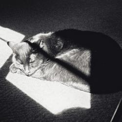 BRC Cats_4
