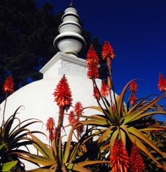 Stupa and aloes_1