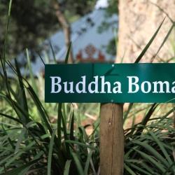 Buddha Boma_4