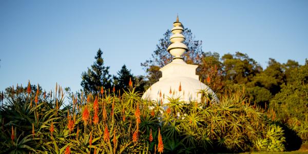 brcixopo stupa and aloes lisa de venter6371