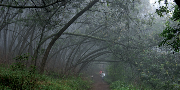 forest bathe