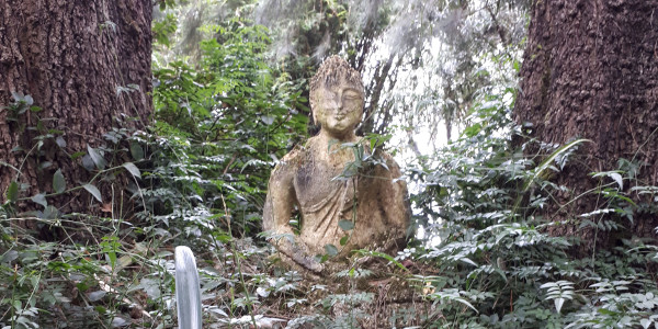 brcixopo mossy buddha photobyBrendonHatcher