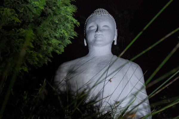 brcixopo buddha fanele dube2020