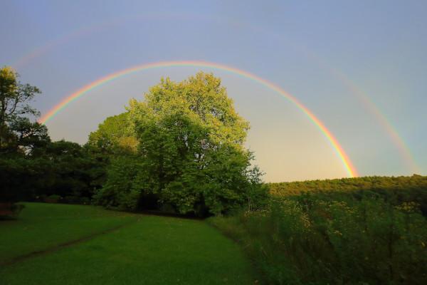 andrew brown rainbow