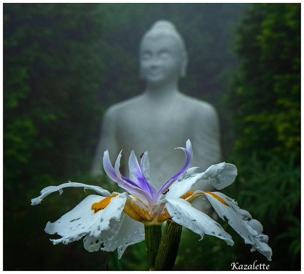 rain iris brcbudhha