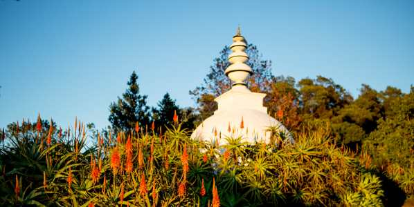 brc ixopo stupa aloes