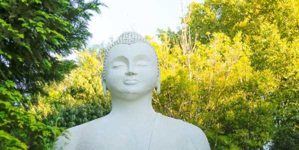 buddha brc ixopo c flores