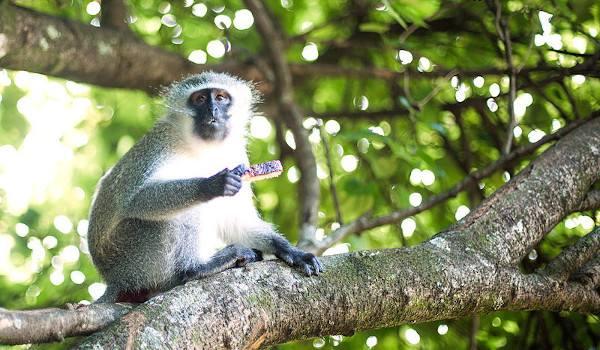 monkey bread cflores5490