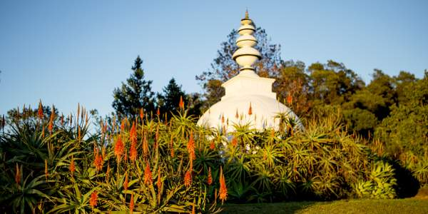 lisa de venter brc ixopo stupa and aloes9B1A6371