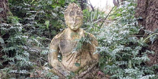 mossy buddha brendonhatcher