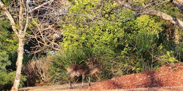 andrew brown buck garden