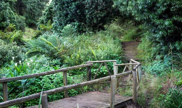 bridge a buckland