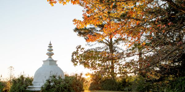 autumn leaves at the stupa l de venter