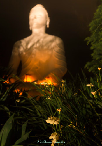buddha in the flowers