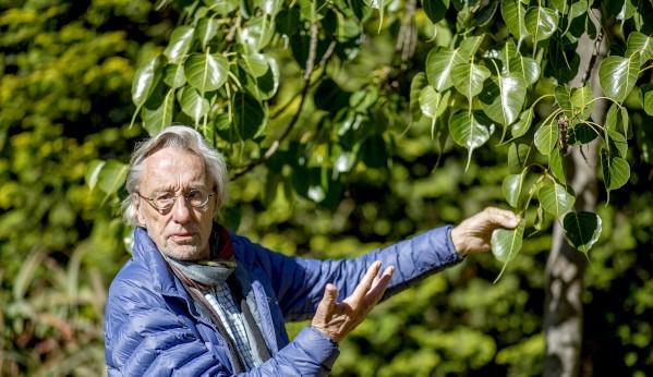 louis van loon bodhi tree lisa de venter