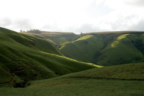 hills.a shaw