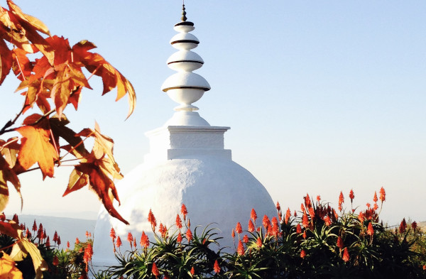 stupa aloes