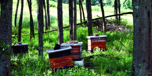 brc bee hives