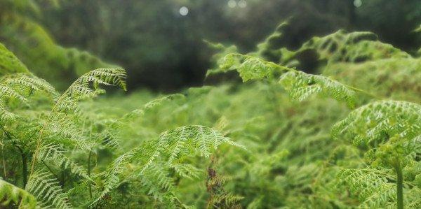 fern forest jason ross