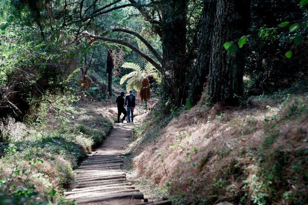 forest path steve mcccurrach