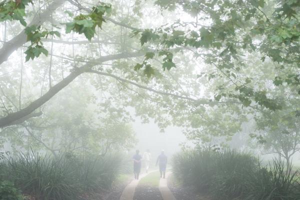 mist through the trees a buckland