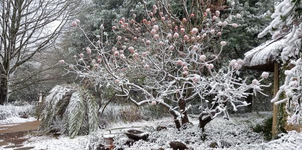 snow brc gardenstudio fiona robinson