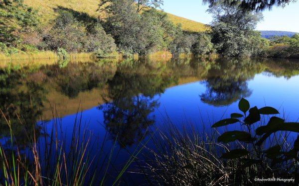 a brown dam