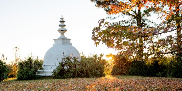 stupa leaves l de venter