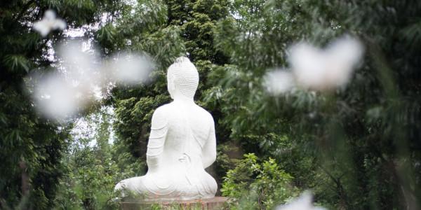 brc buddha rupa a buckland