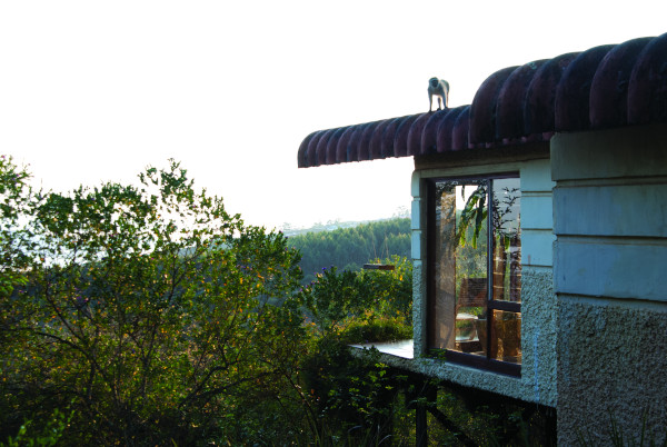 monkey roof a shaw0115