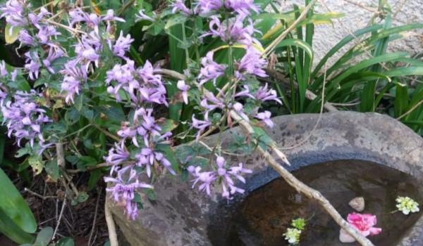 blooms bhatcher