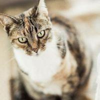 k-house-cat_SL_3378