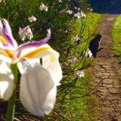 BRC cat on a path_1