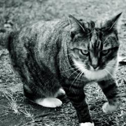 BRC Cats_2