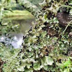 Environment _10