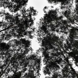 Environment _16