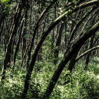 a-kuti-path_SL_3643